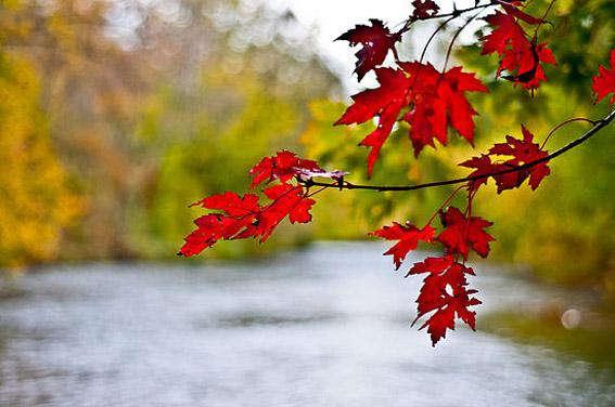outono-inverno-2012-vermelho
